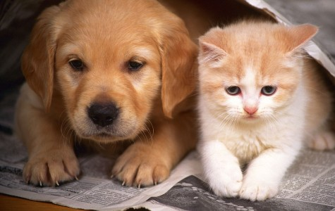 What's better: cats or dogs?