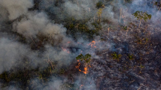 Fires+Ravage+Largest+Tropical+Rainforest+in+the+World