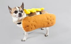 Dog dressed as a Hot Dog for Halloween